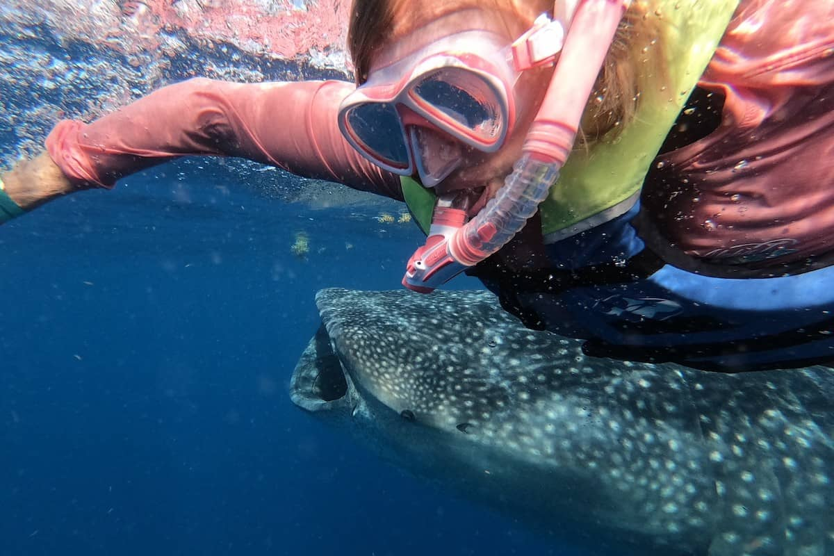 photo of my wife beside a whale shark mouth open