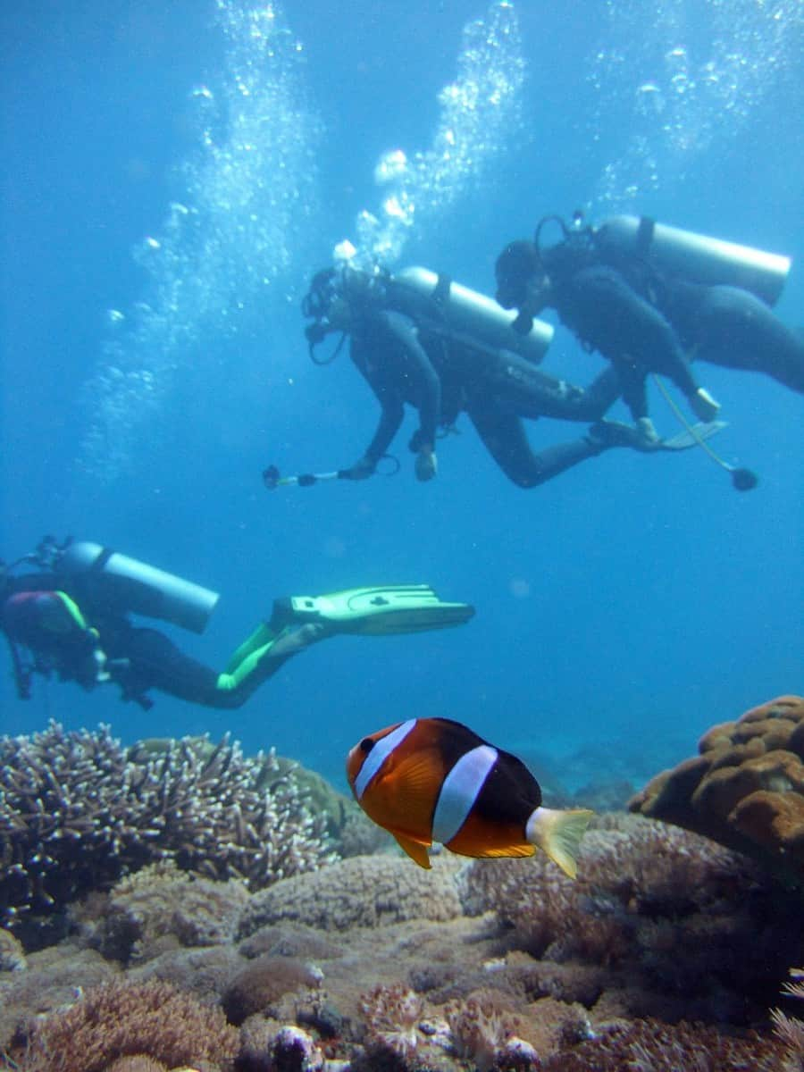 Diver Clown Fish Diving Anemone  - catsdhika / Pixabay